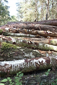 A Stack of Logs, August 2011