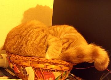 Cat in Circles