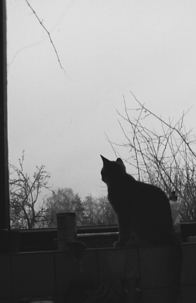 A cat watches the night fall.