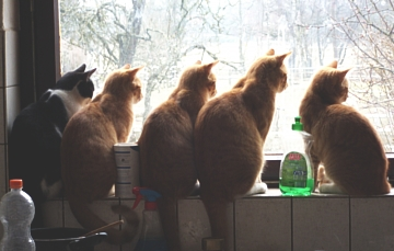 five cats on the window ledge