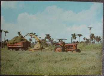 Picadura Valleys Cattle Breeding Project, Radio Habana Cuba QSL, 1988