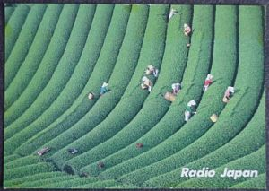Radio Japan QSL card from 1986, showing a tea plantation.